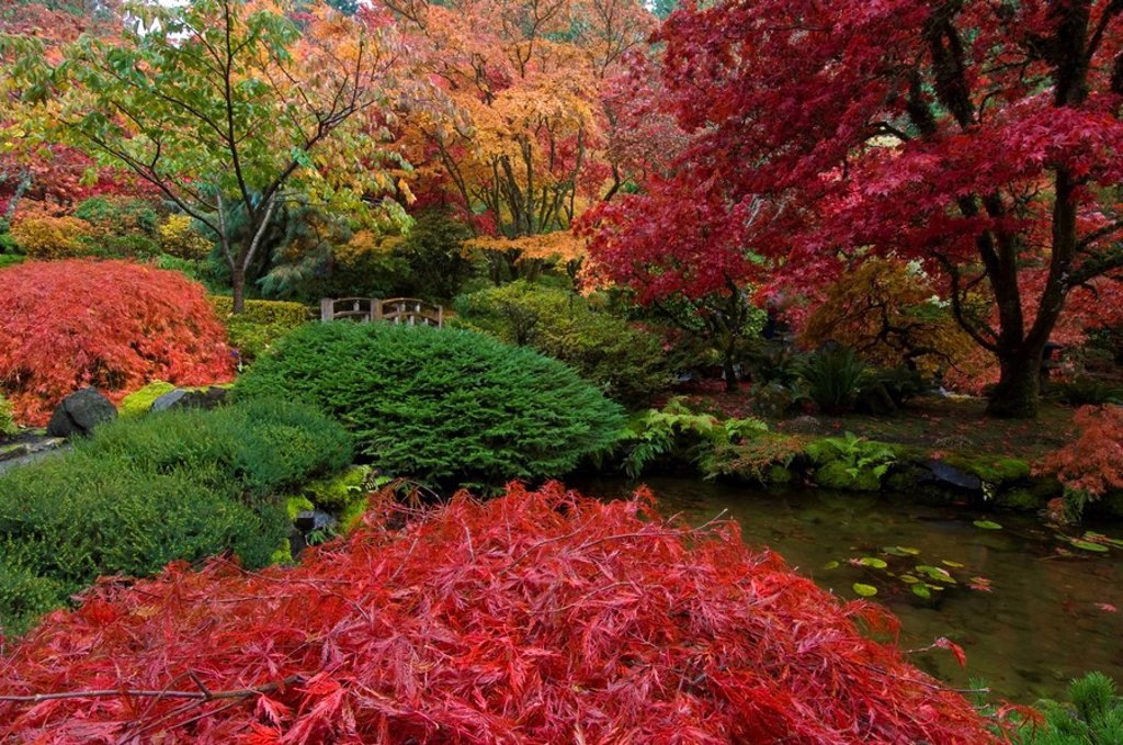 Japanese Garden in autumn at the Butchart Gardens, Victoria, Vancouver Island, British Columbia, Canada : Stock Photo