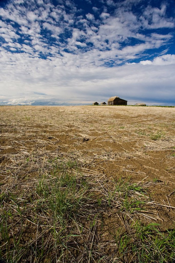 Stock Photo: 1990-16871 Empty field with abandoned homestead, Saskatchewan, Canada