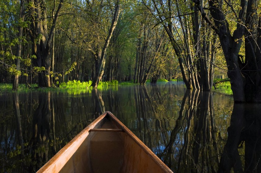 Spring morning paddle on Nottawasaga River, Ontario, Canada : Stock Photo