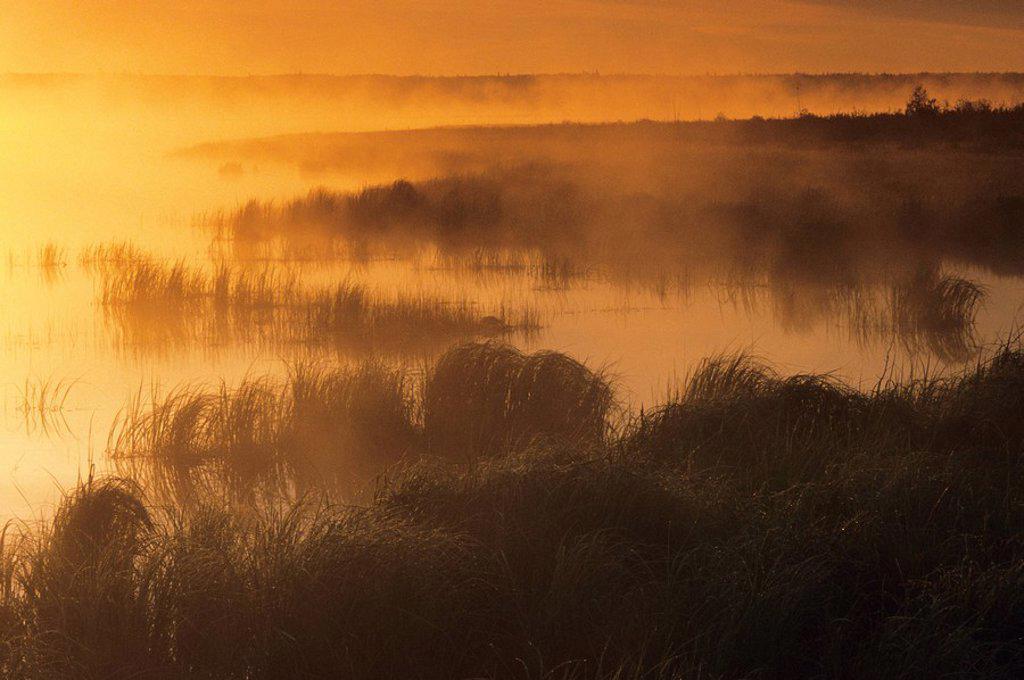 Sunrise and mist on Whirlpool Lake, Riding Mountain National Park, Manitoba, Canada : Stock Photo