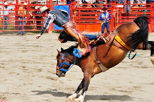 Cowboy being thrown from his ride during saddle bronc riding at the Luxton Pro Rodeo in victoria, BC. : Stock Photo