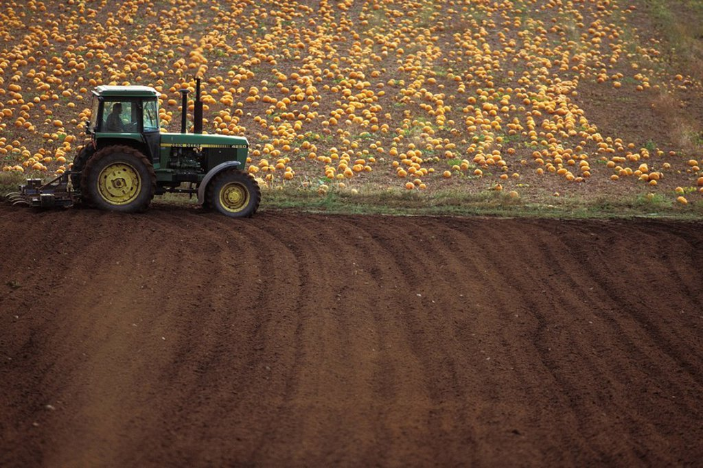 Tractor by pumpkin field, Saanich Peninsula, Vancouver Island, British Columbia, Canada : Stock Photo