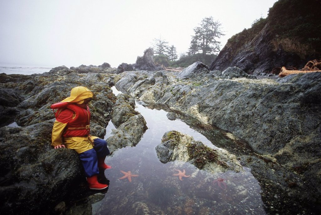 boy looks into tidepool in rain, Vancouver Island, British Columbia, Canada : Stock Photo