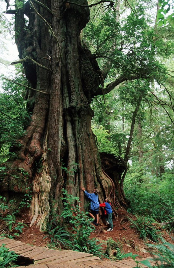 Stock Photo: 1990-22721 Hanging Garden tree and 2 boys, Tofino, Meares Island, Vancouver Island, British Columbia, Canada