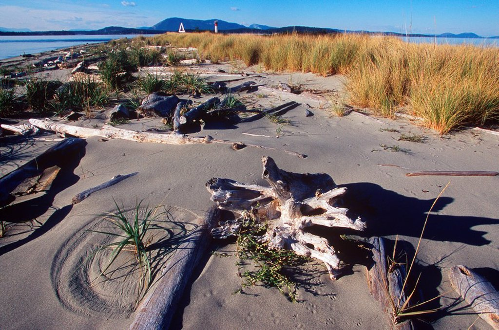 Stock Photo: 1990-23261 Gulf Islands, Sidney Spit, British Columbia, Canada