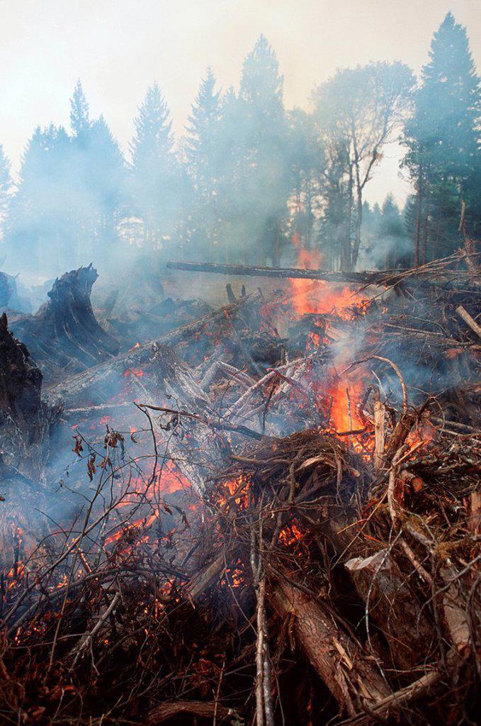 Logging slash fire, burning rubble, British Columbia, Canada : Stock Photo