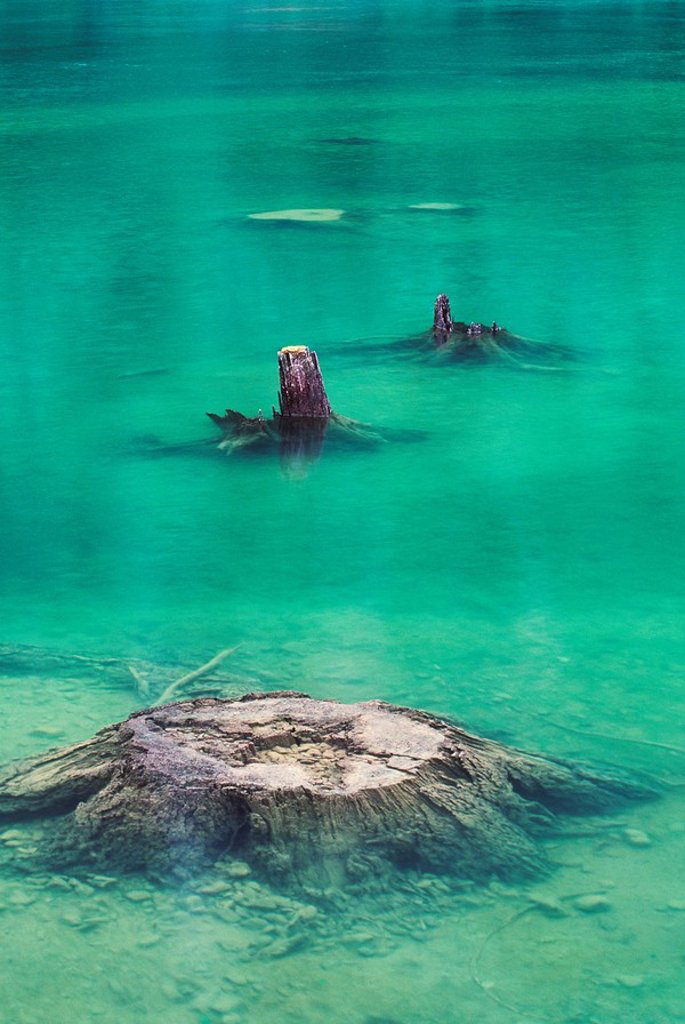 Stock Photo: 1990-23352 Dammed lake remnants, cut tree stumps in new lake, British Columbia, Canada