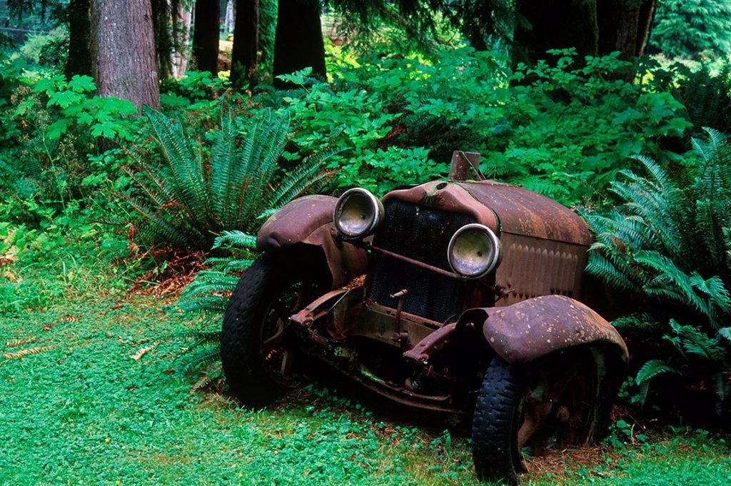 Stock Photo: 1990-24694 Sayward - rusted antique car at Cable House cafe, Vancouver Island, British Columbia, Canada