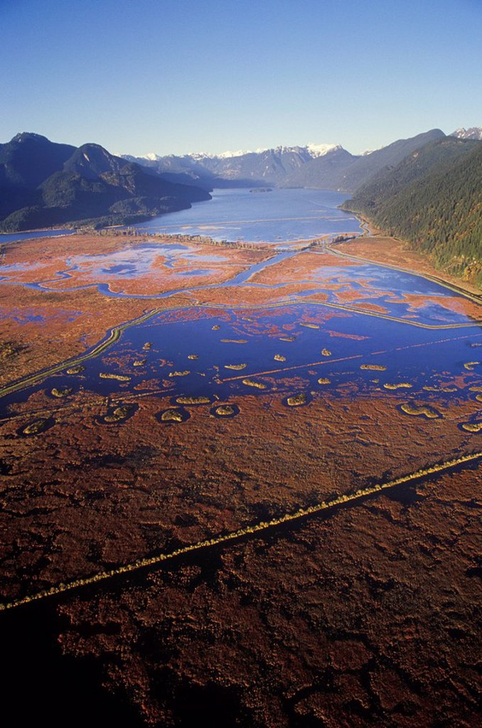 Aerial of Cranberries in the Pitt River, Fraser Valley, British Columbia, Canada : Stock Photo