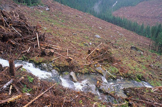 Clearcut logging, Gribbell island, Great Bear Rainfrorest, British Columbia, Canada : Stock Photo