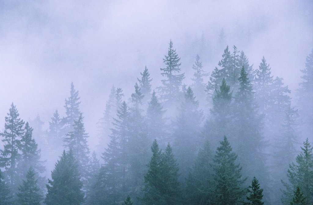 Stock Photo: 1990-27341 Foggy forest, near Hope, British Columbia, Canada