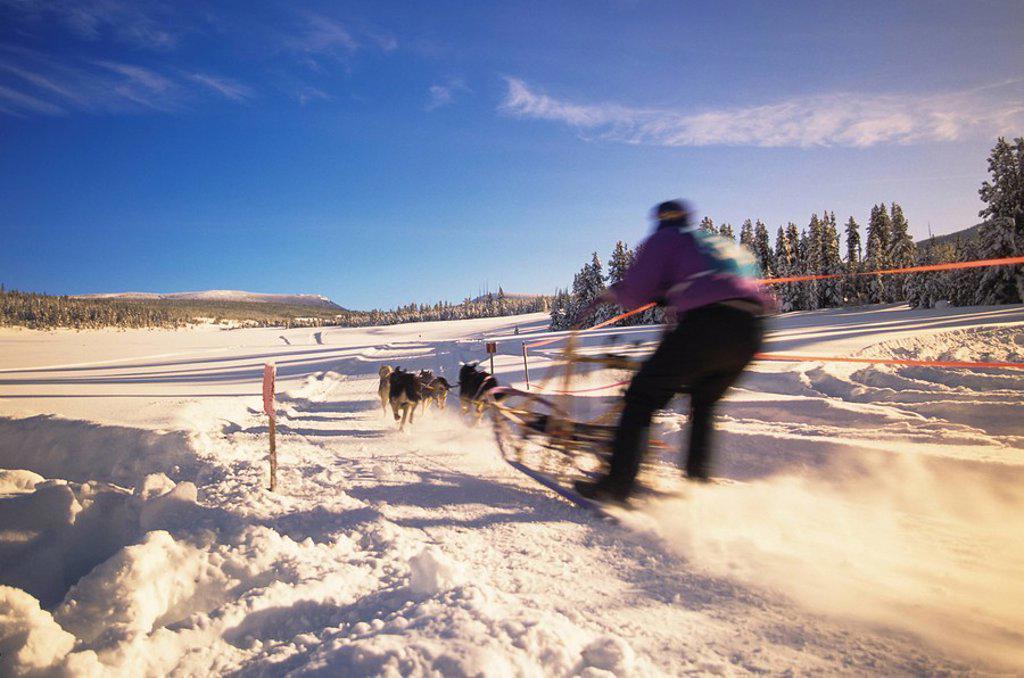 Stock Photo: 1990-28153 Sled dog racing, Houston, British Columbia, Canada