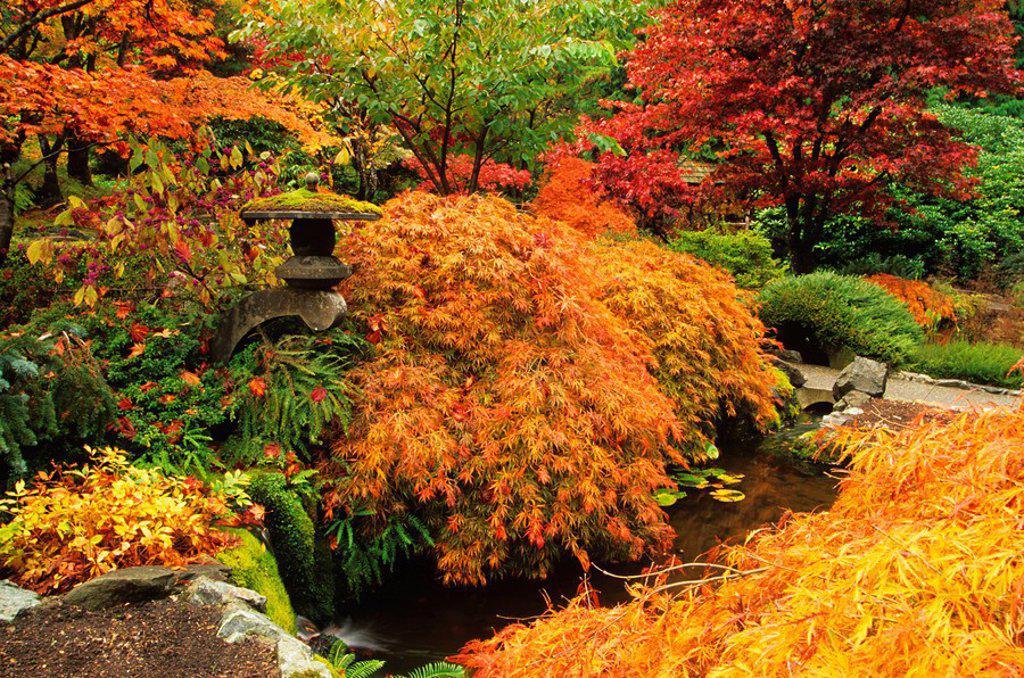 Autumn colors in Butchart Gardens, Victoria, Vancouver Island, British Columbia, canada : Stock Photo
