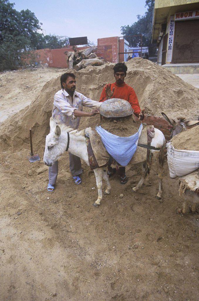 India, Uttar Pradesh, Agra, workmen using donkey to move sand : Stock Photo