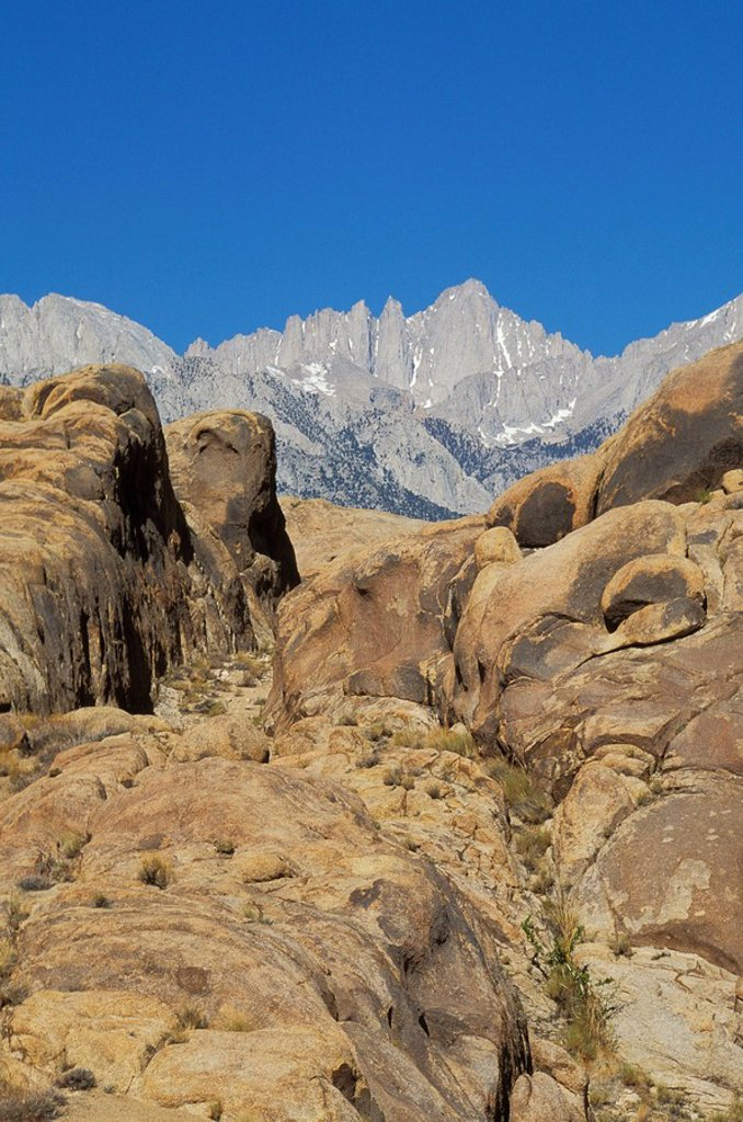 USA, California, Mt  Whitney, highest mountain in lower 48 states, from Alabama Hills, Owens Valley : Stock Photo