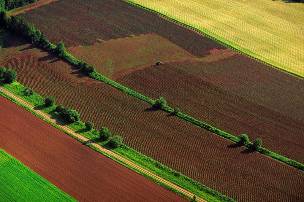 Aerial of potato fields, Tea Hill, Prince Edward Island, Canada : Stock Photo