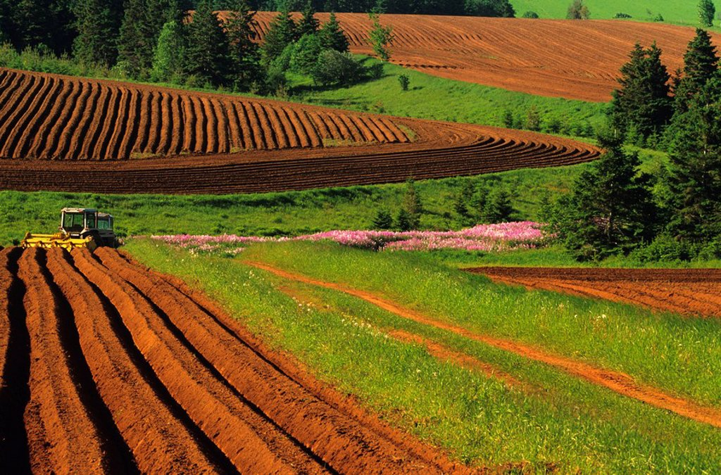 Stock Photo: 1990-3103 Potato fields, Clinton, Prince Edward Island, Canada
