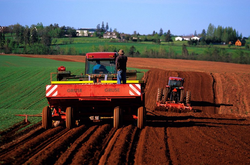 Stock Photo: 1990-3104 Planting potatoes, Tryon, Prince Edward Island, Canada