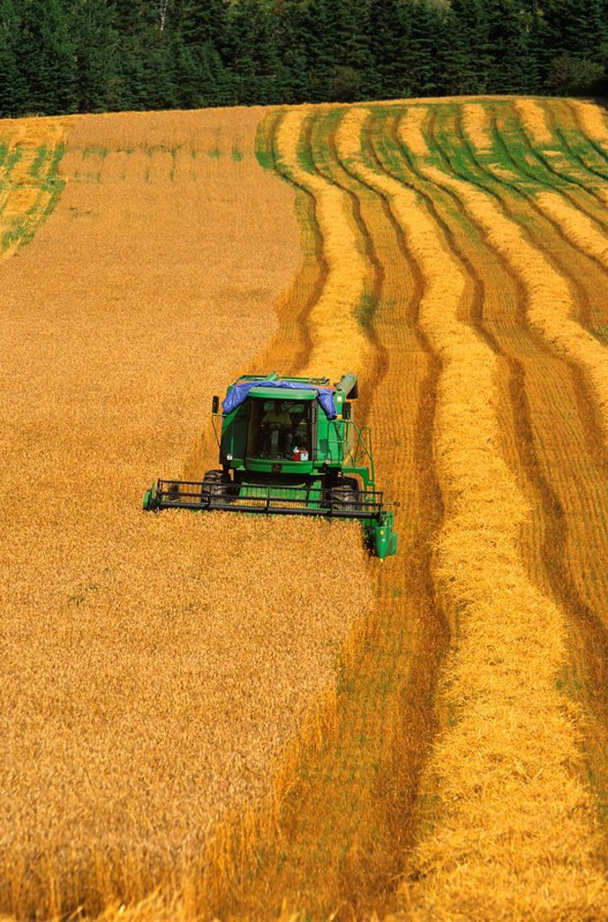 Combining grain, New Glasgow, Prince Edward Island, Canada : Stock Photo