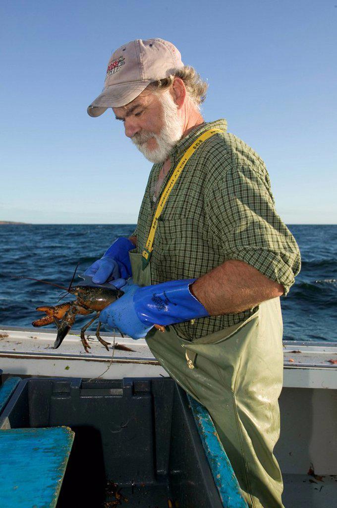 Lobster Fishing, Rustico, PEI, Prince Edward Island, Canada : Stock Photo
