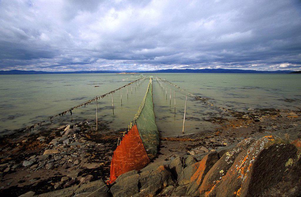 Weir nets, Kamouraska, Quebec, Canada : Stock Photo
