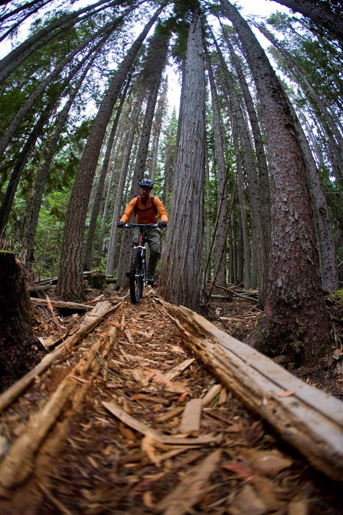 A middle ages mountain biker riding the singletrack trails around Golden, BC : Stock Photo