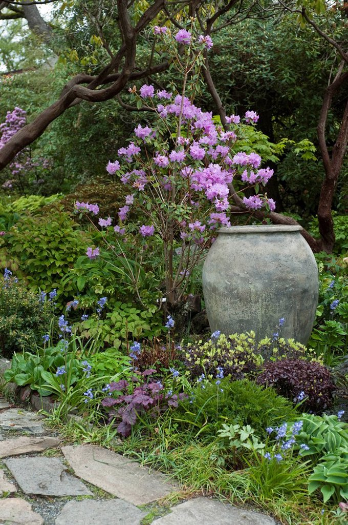 Abkhazi Garden in spring time, Victoria, British Columbia, Canada : Stock Photo