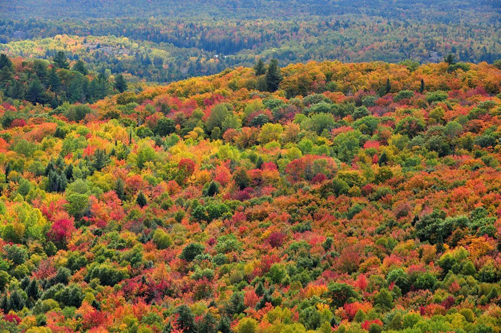 Hardwood forest in autumn from Firetower Hill. Elliot Lake, Ontario, Canada. : Stock Photo