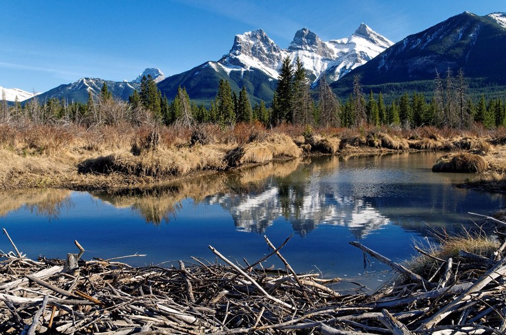 Stock Photo: 1990-38647 Beaver dammed creek and The Three Sisters peaks near Canmore, Alberta, Canada.