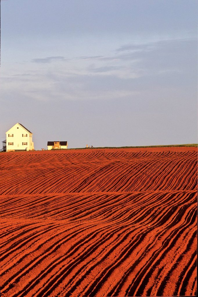 Farm house and planted potato field, Park Corner, Prince Edward Island, Canada. : Stock Photo