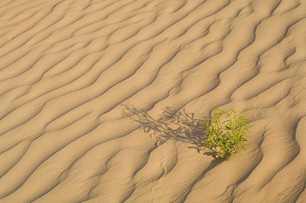 Stock Photo: 1990-39117 Open sand dunes, Great Sand Hills, Saskatchewan, Canada