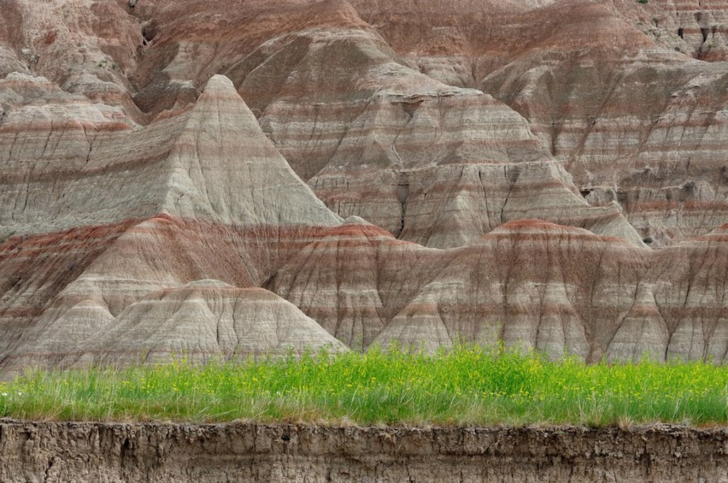 Sedimentary layers in badlands with colony of sweetclover. Badlands National Park, South Dakota, United States of America. : Stock Photo