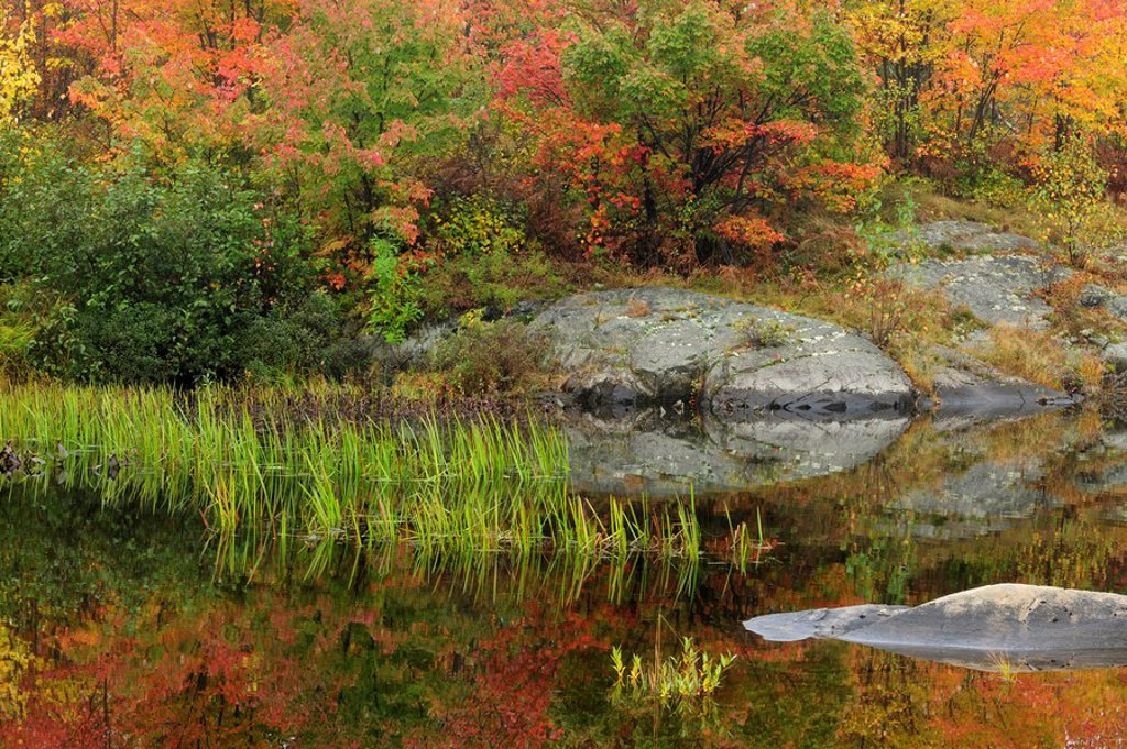 Stock Photo: 1990-40411 Autumn reflections in Fairbank Creek. Greater Sudbury, Ontario, Canada.