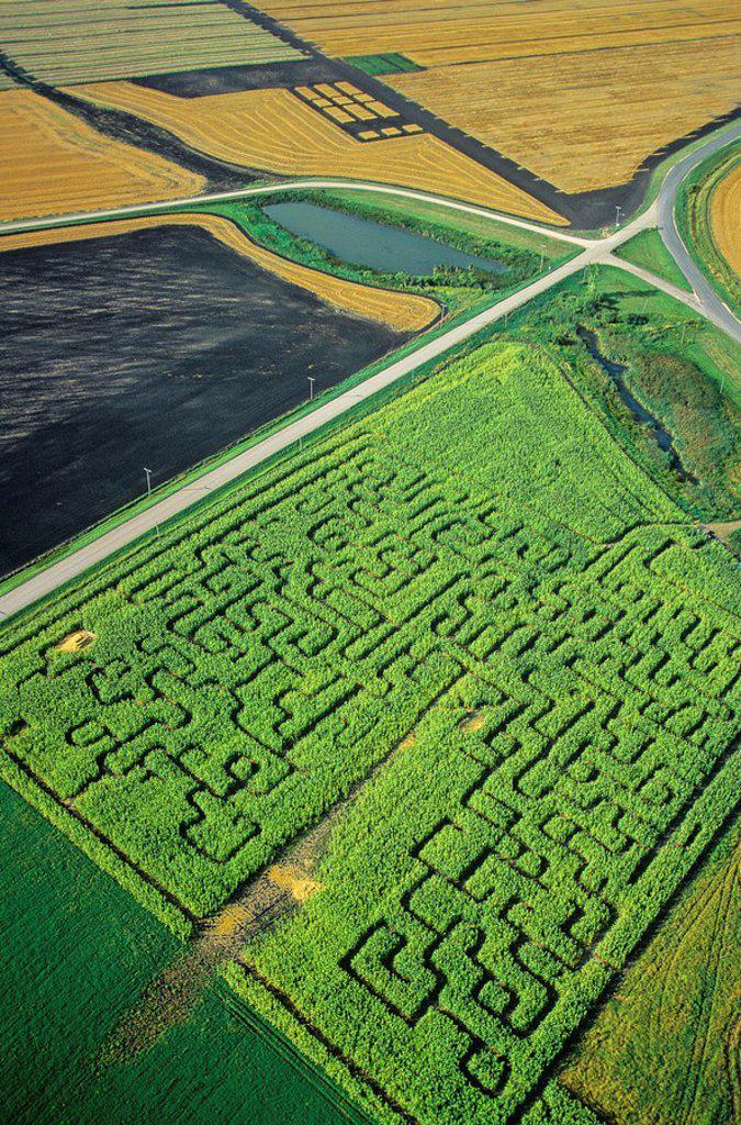 Stock Photo: 1990-4120 Corn Maze, manitoba, Canada
