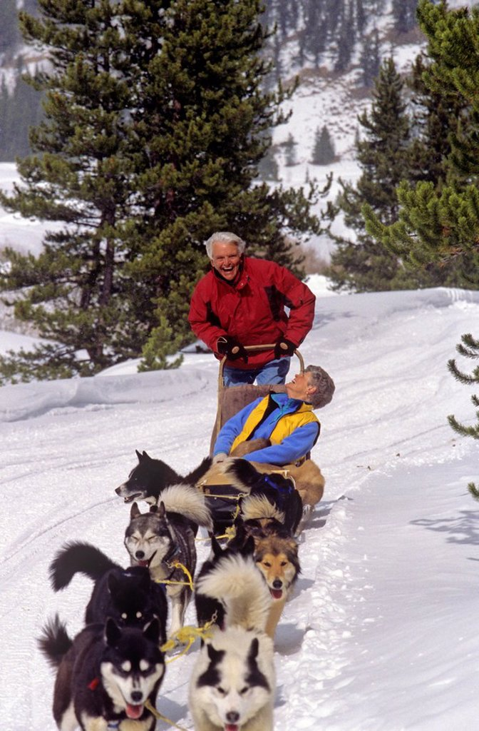 Retired couple dog sledding in Whistler, British Columbia, Canada : Stock Photo