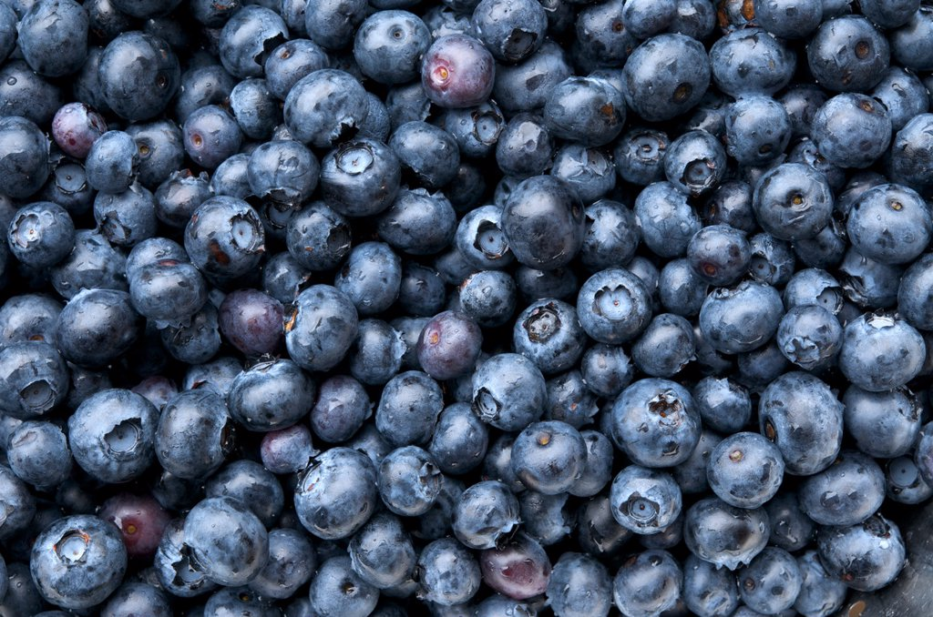 Close up of blueberries Vaccinium corymbosum. : Stock Photo