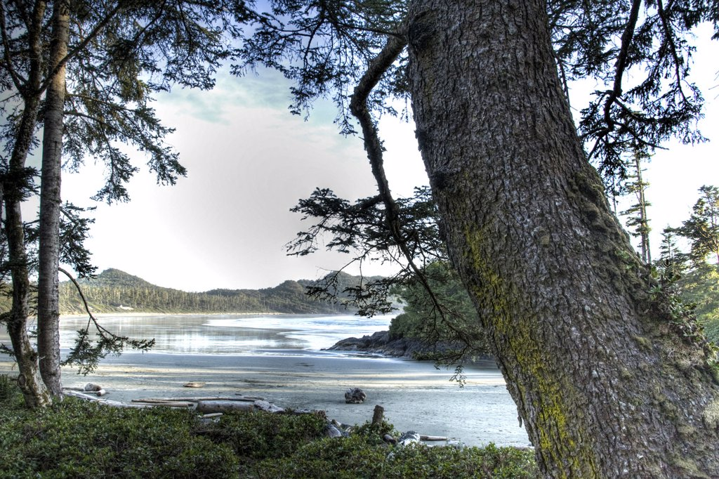 Cox Bay beach in early morning light framed by trees : Stock Photo