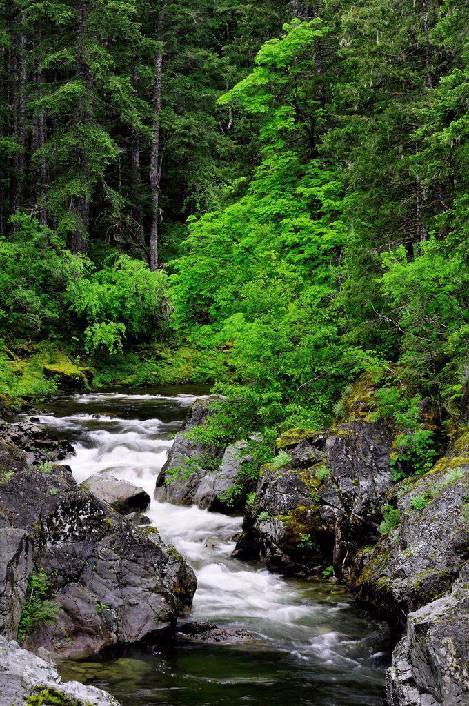 Stock Photo: 1990-44824 The Koksilah River near Burnt Bridge near Shawnigan Lake, British Columbia, Canada.