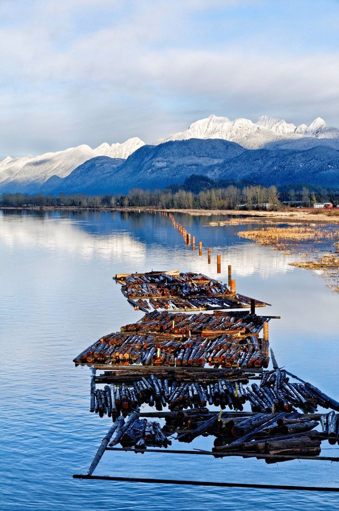 Log boom, Pitt River Intertidal habitat, Pitt Meadows, British Columbia, Canada : Stock Photo