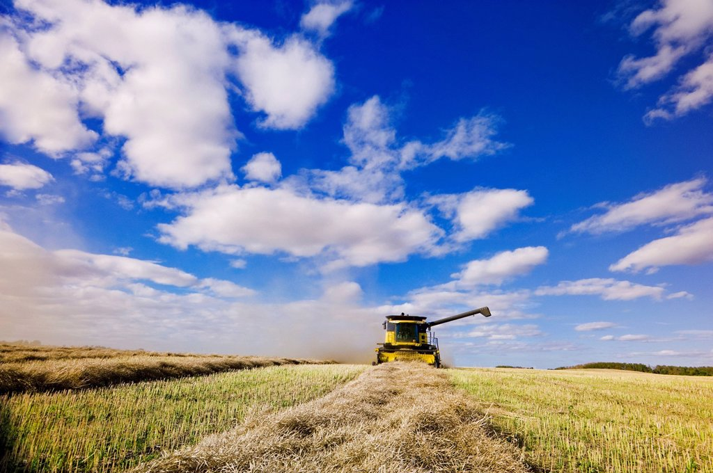 A combine harvester works in a canola field, near Somerset, Manitoba, Canada : Stock Photo