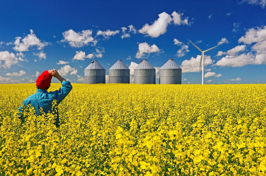 A man looks out over a field of bloom stage canola with grain binssilos and a wind turbine in the background, Tiger Hills, Manitoba, Canada : Stock Photo