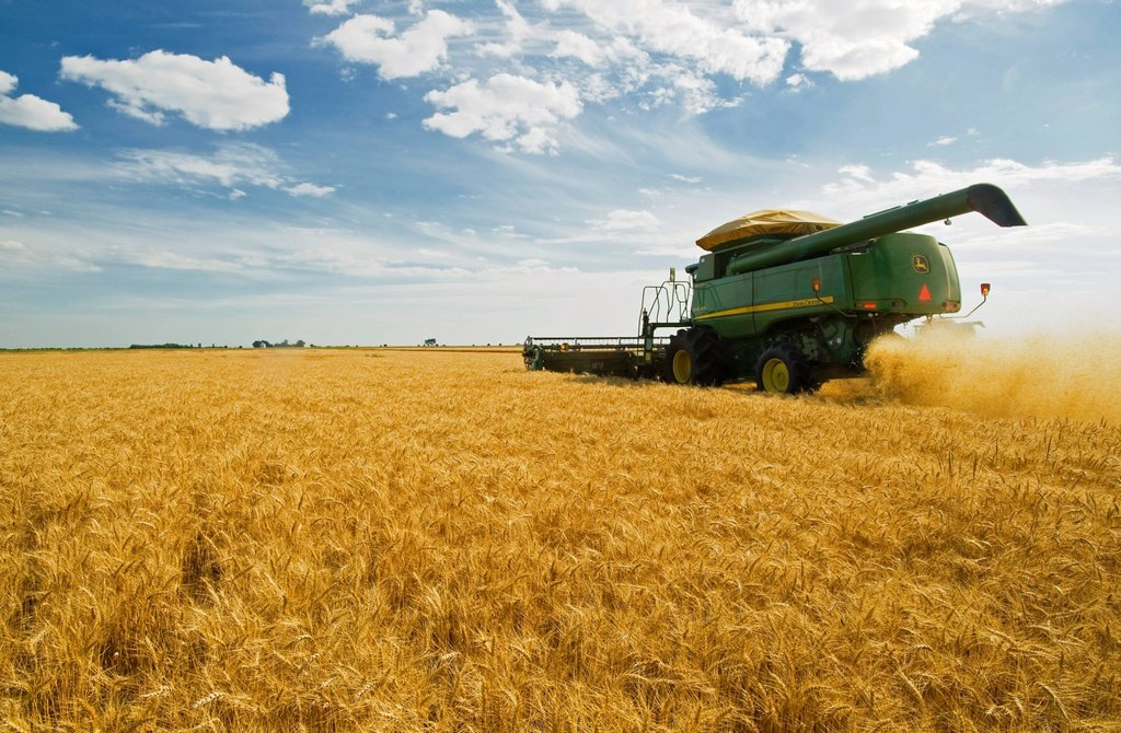 A combine straight cuts mature winter wheat near Kane, Manitoba, Canada : Stock Photo