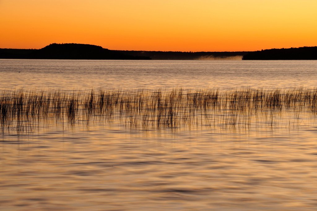 Reedbeds on Lake Mindemoya at sunrise, Manitoulin Island, Ontario, Canada : Stock Photo