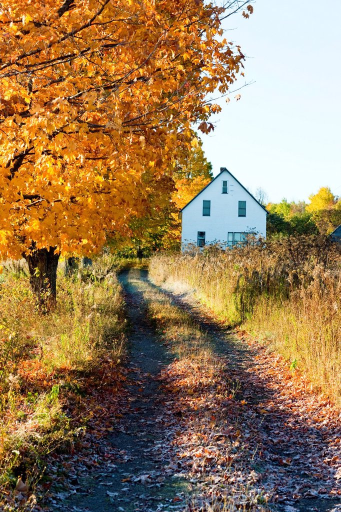 Fall foliage and house, Saint John River Valley, Fredericton, New Brunswick, Canada : Stock Photo