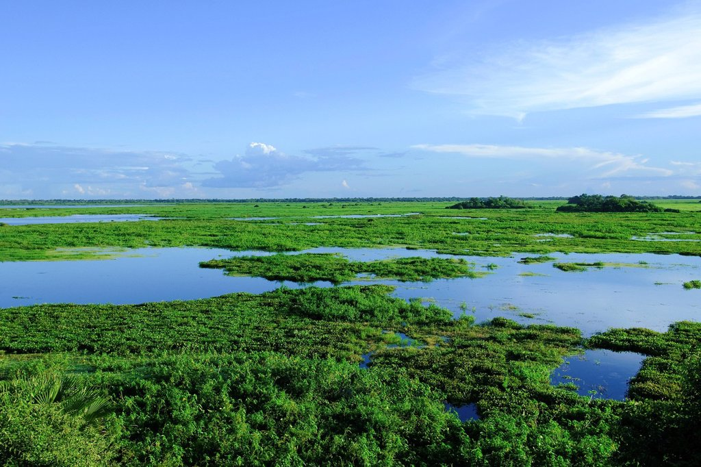 Pantanal wetlands, Southwestern Brazil, South America : Stock Photo