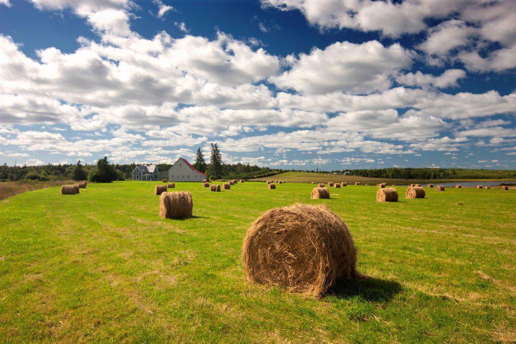 Baled hay and farm, Acadian Coast, New Brunswick, Canada : Stock Photo