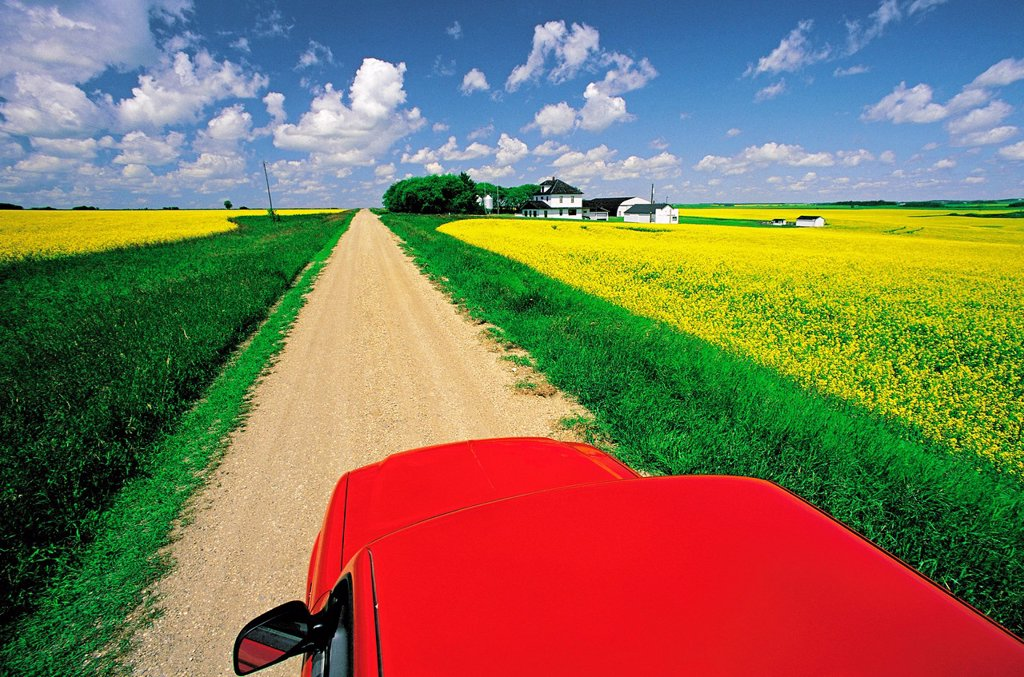 Stock Photo: 1990-51179 View from a truck overlooking a country road with blooming canola fields and farm, Tiger Hills, Manitoba, Canada