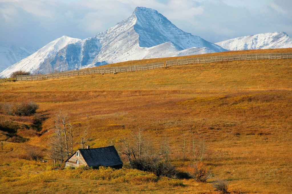 Old abandoned farmstead with mountains for Waterton National Park in the distance, outside of Pincher Creek, Alberta, Canada : Stock Photo