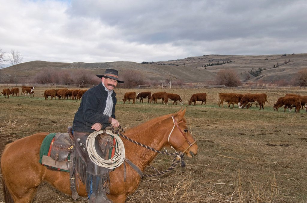 A cowboy and his horse ´Shorty´ stop for a break while on the watch for birthing cows at Quilchena Ranch, near Merritt, British Columbia, Canada : Stock Photo