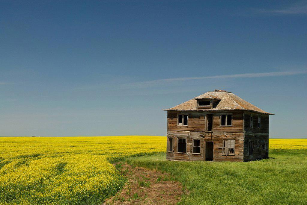 Abandoned farmhouse and canola field near Leader, Saskatchewan, Canada : Stock Photo
